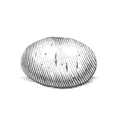 Potato engraving style vector