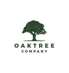 vintage retro oak banyan maple tree service logo vector image