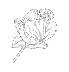 flower ink sketch isolated on white background vector image