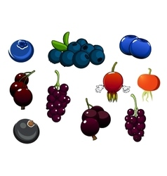 Fresh blueberries blackcurrant and briars fruits vector image