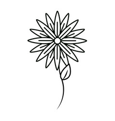 Figure beauty flower decoration vector