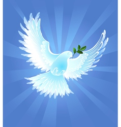 Peace Dove vector image