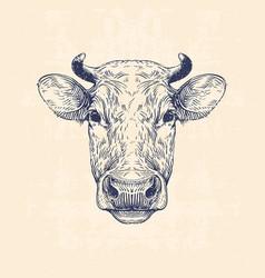 Cow head vector