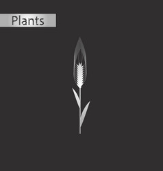 Black and white style icon of triticum vector