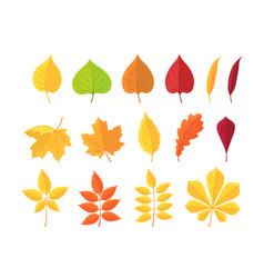 Botanical set bright autumn leaves vector
