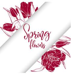 Sketch linear tulips blossom vector
