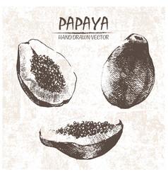 digital detailed papaya hand drawn vector image