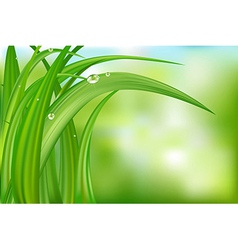 Green Background With Grass vector image vector image