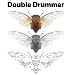 Double drummer in three sketches vector