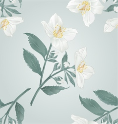 Seamless texture Twig jasmine flowers with leaves vector image vector image