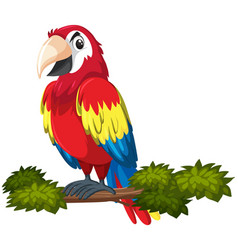 a parrot character on tree branch vector image
