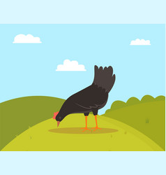 Farm bird eating fowl on hill farming vector