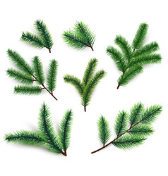 fir branches christmas tree branching isolated vector image