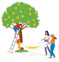 People picking apples woman helping man harvesting vector