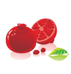 Pomegranate fruit vector