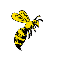 Yellowjacket wasp drawing vector
