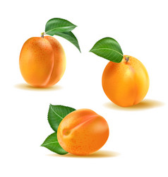 Apricot set collection of realistic 3d vector
