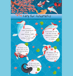 Carp koi infographics features of different types vector