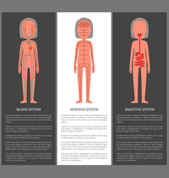 blood nervous and digestive organism systems set vector image