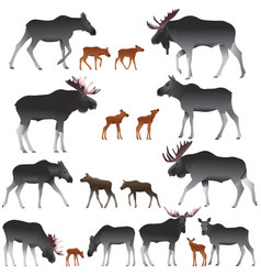 Collection of mooses also named elks and its cubs vector
