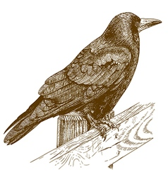 etching raven vector image