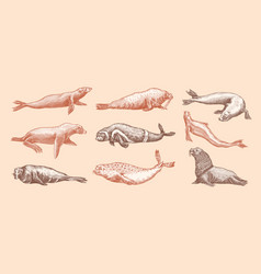 fur seal steller sea lion and walrus ribbon vector image