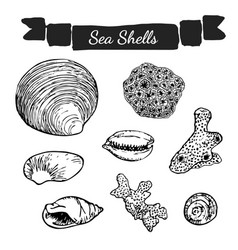 sea shells and corals collection vector image