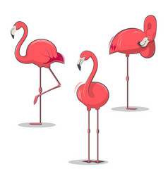 set of pink flamingos bird in different poses vector image