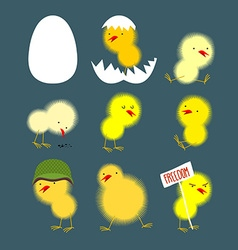 Set of yellow chicks white egg and chicken Chick vector image