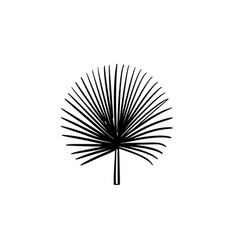 spiky palm leaves hand drawn sketch icon vector image