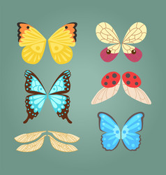 Wings isolated animal feather pinion butterfly vector