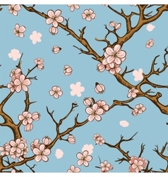cherry or sakura seamless pattern background vector image