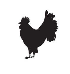 Black Silhouette of rooster on a white background vector image vector image