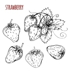 Set strawberry drawing vector image