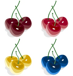 Sweet cherry multicolored isolated on white vector image vector image