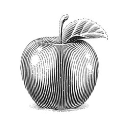 Apple fruit with leaf scratch vector