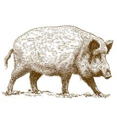engraving wild boar vector image vector image