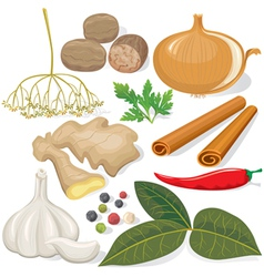 Spices and vegetables for cooking vector image