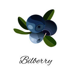 bilberries isolated icon vector image vector image