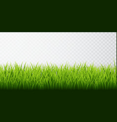 Green grass border set on transparent background vector