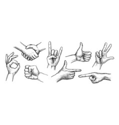 hand gestures set vector image