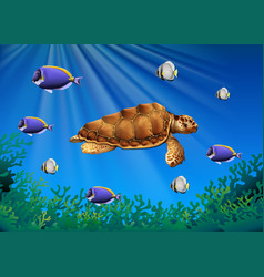 Sea turtle and fish swimming underwater vector