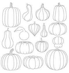 Set black and white images with pumpkins vector