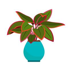 aglaonema house plant vector image vector image