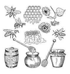 hand drawn pictures of honey products vector image