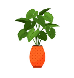 Alocasia house plant in flower pot vector
