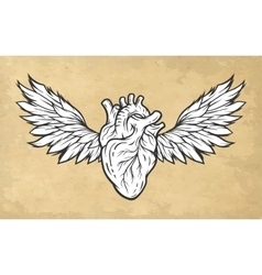 Anatomical heart with wings symbol vector image
