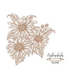 Calendula flowers and leaves medical herbs set vector