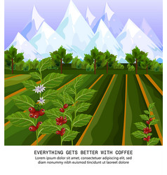 coffee beans growing in farm harvest fields vector image