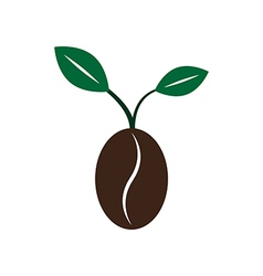 Coffee new born growing bean seed plant with leave vector image
